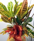Decorated Fall Croton