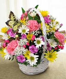 Daisy and Carnation Butterfly Basket Arrangement