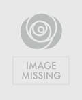 Two Dozen Multicolored Roses
