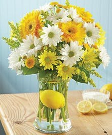 Gerbera and Daisy Arrangement