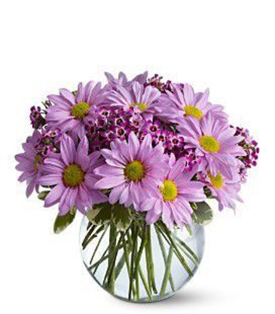 Delightfully daisy bowl floral arrangement in minneapolis mn purple daisy arrangement izmirmasajfo