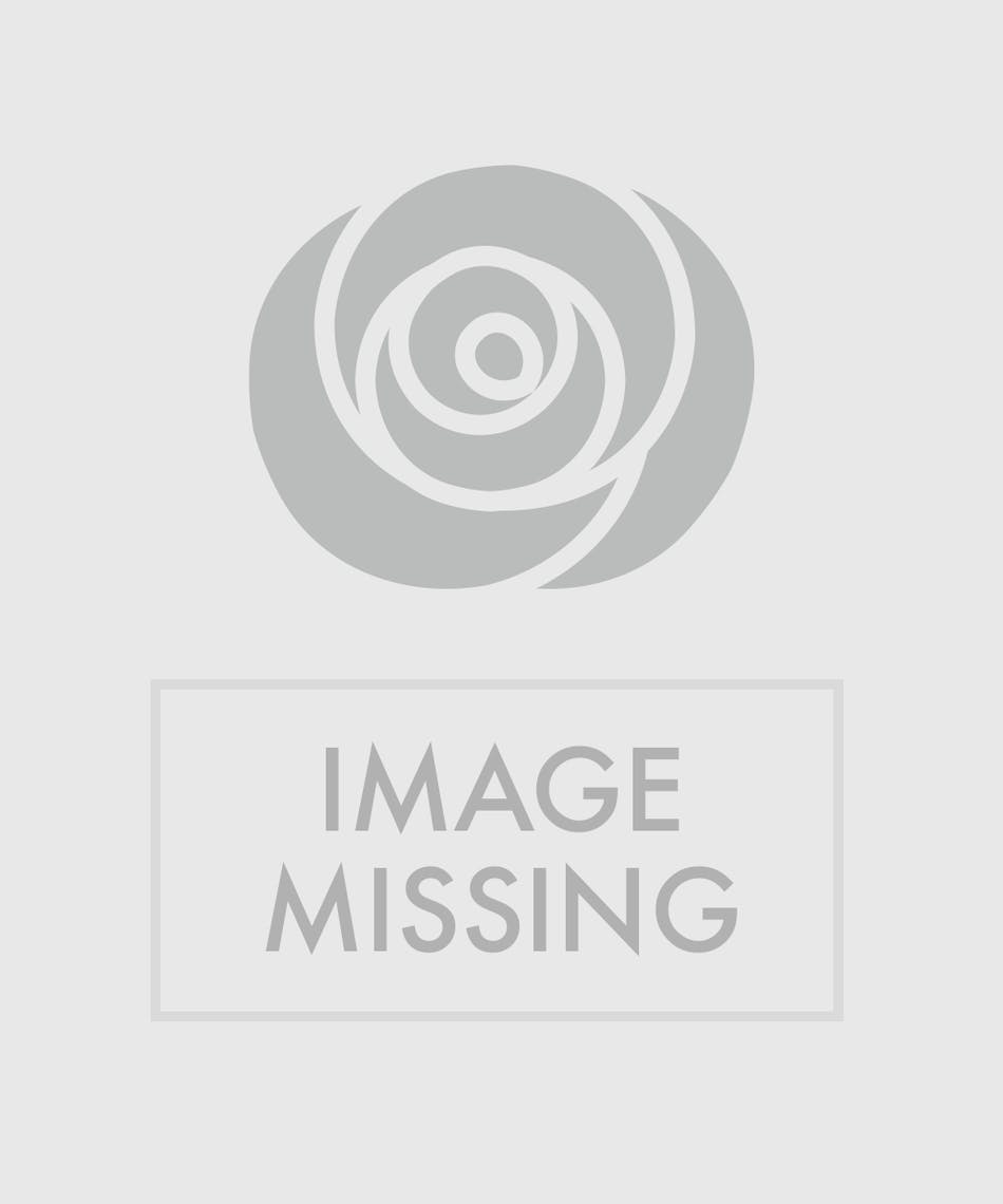 Candy cane basket in minneapolis mn schaaf floral carnation and candy cane basket arrangement izmirmasajfo Choice Image