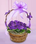 Butterfly &  Violet Basket