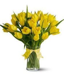 Yellow Tulips Arranged