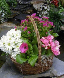 Blooming Spring Planter