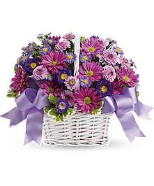 lavender daisy spray chrysanthemums, dark purple Matsumoto asters, lavender cushion spray chrysanthemums and purple Monte Cassino asters