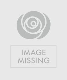 One dozen orange roses in classic vase.