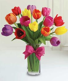 Spring Colorful Tulips