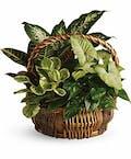 Schaaf Garden Basket