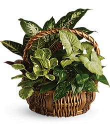 A mixture of green plants arranged together in a basket.