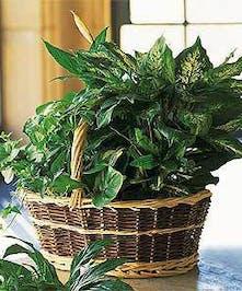 Green Plant European Garden