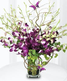 Purple Dendrobium Orchid Arrangement