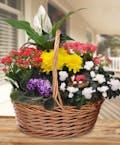 Garden Basket In Bloom