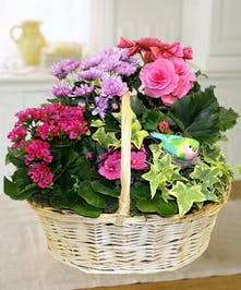Sweet Bird Blooming Plant Garden Basket