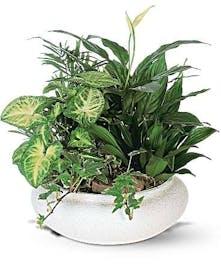 A beautiful mixture of green plants
