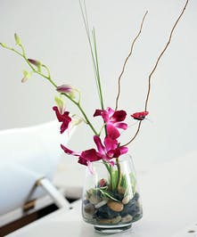 Asian Purple Dendrobium Orchid Arrangement
