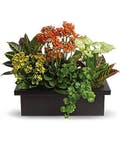 Assorted Planter