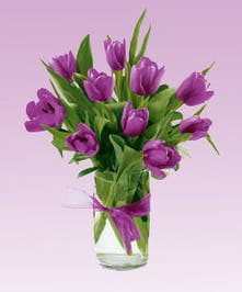 Purple Tulips Arranged