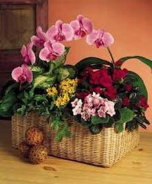 Blooming Orchid European Garden