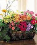 Deluxe Flowering Garden