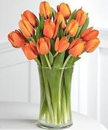 Orange Tulips Arranged