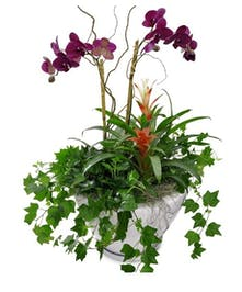 Orchid European Garden
