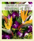 Designers Choice - Tropical Flowers