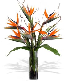 Birds of Paradise Arranged