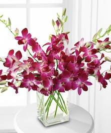 Dendrobium Orchid Arrangement