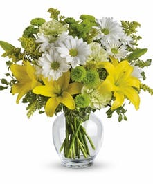 Radiant Beauty Daisy and Lily Arrangement
