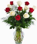 One Dozen Red & White Delight Roses