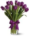 15 Purple Tulips