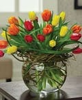 20 Multi Colored Tulips