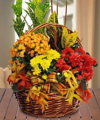 Fall European Basket