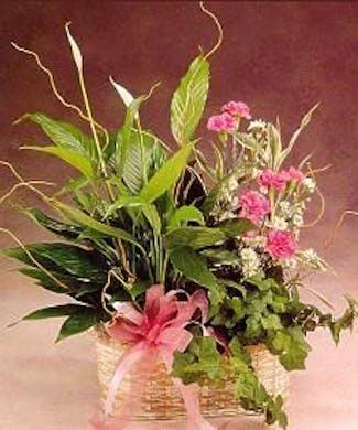 Dish Garden w/a Blooming Plant & Fresh cut flowers