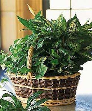 Green Garden Basket Deluxe
