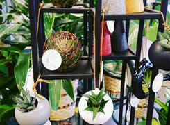In addition to flowers and plants, Schaaf offers a range of gifts and decorations